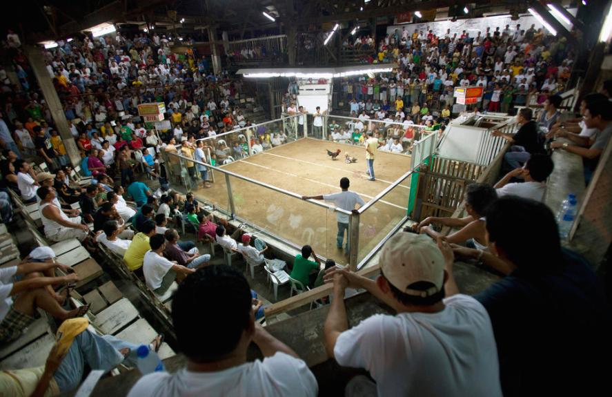 Hunderte Zuschauer passen in die Arena für Hahnenkämpfe von Dumaguete.