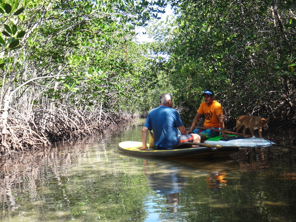 Buzzy Budlong and Frans Betgem on paddleboards in the mangroves of Cebu