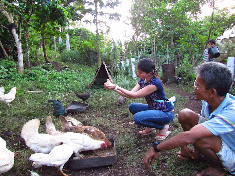 Guest feeding the chicken at Siquijor Homestay