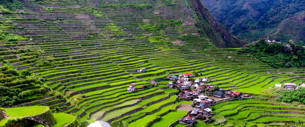 Picture of The Rice Terraces of the Philippine Cordilleras UNESCO World Heritage