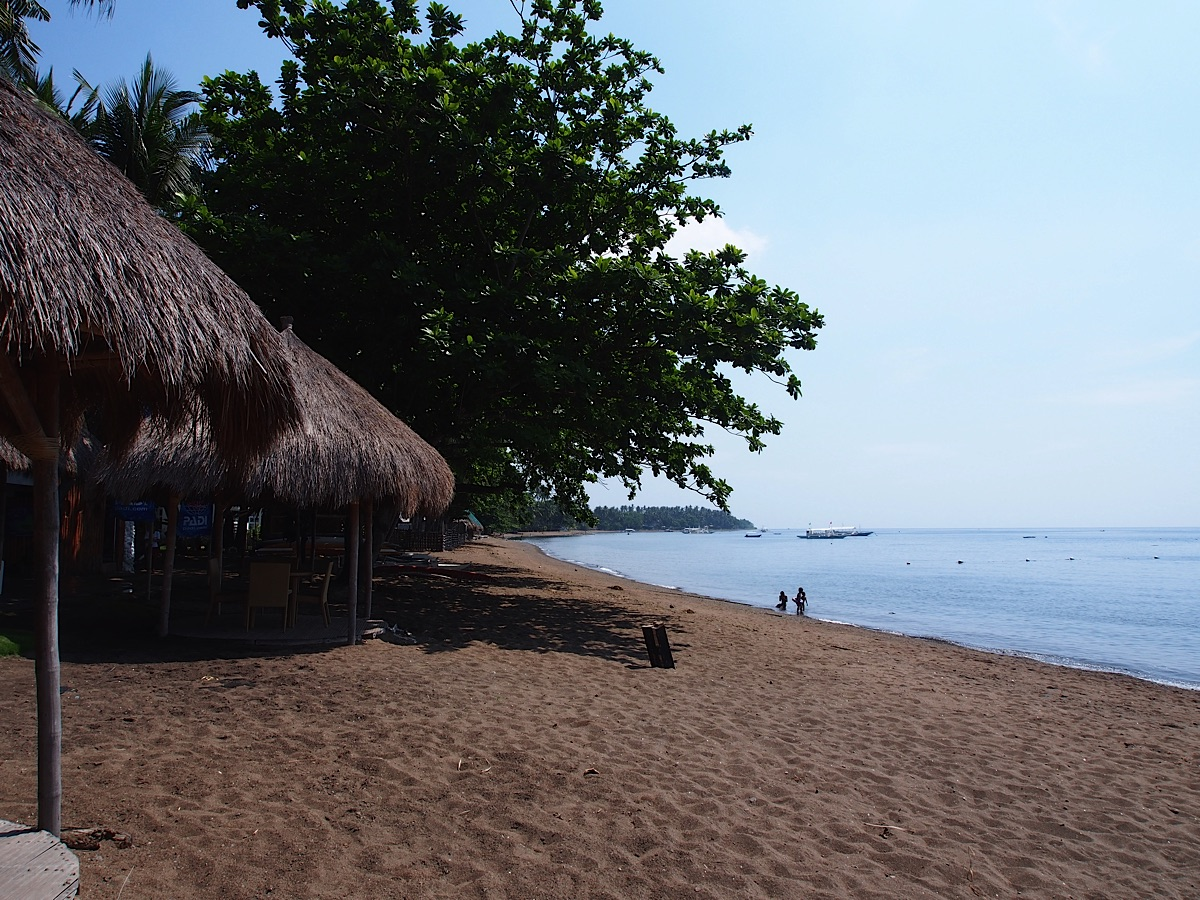 Beach with hut and tree