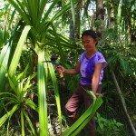 Woman cutting Pandanus leaf Negros