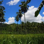 Sugarcane palm trees and mountains Negros