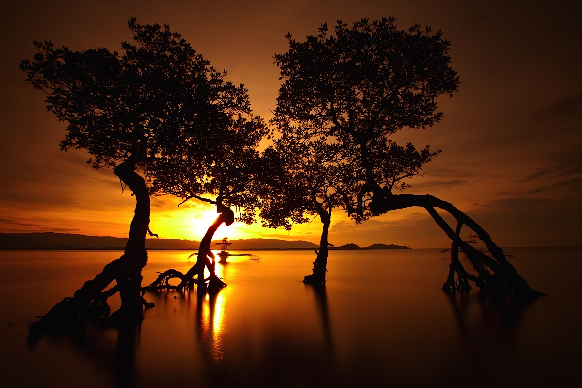 Sunrise with trees Palawan Philippines