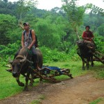 Two men on buffaloes on Panay